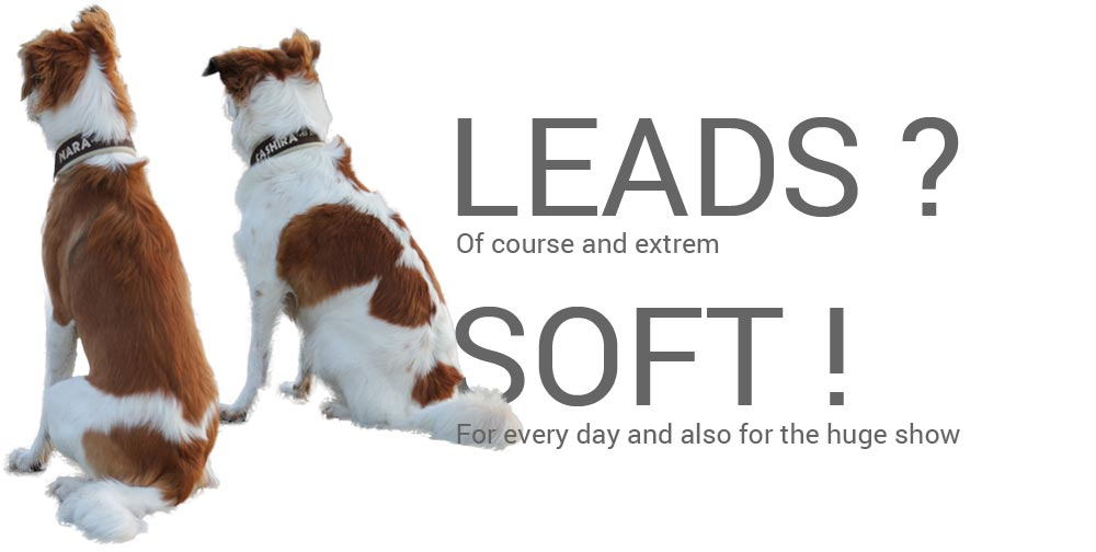 LeRoiys dog leads